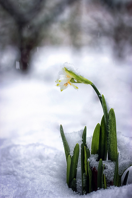 What to do in the garden this winter